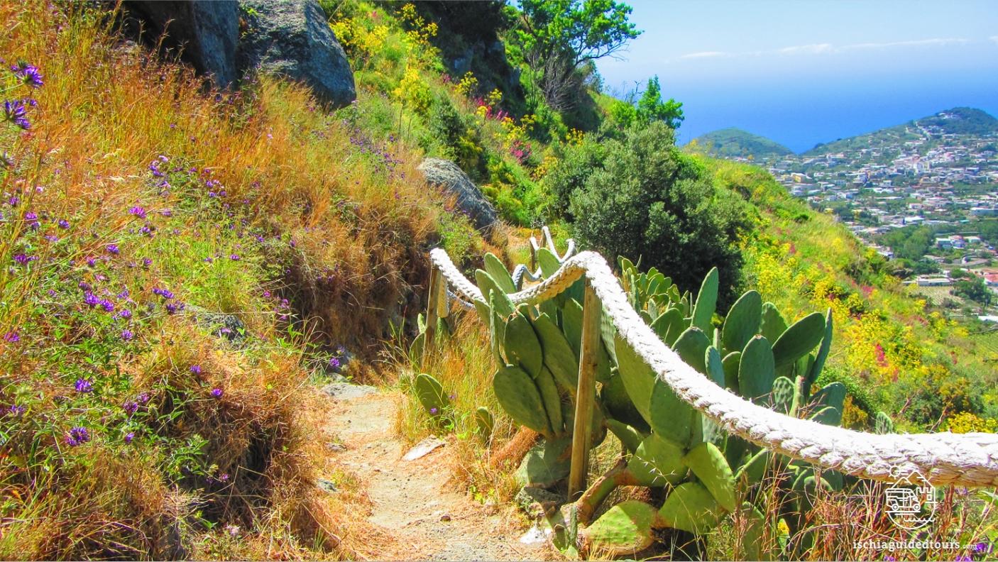 Bocca di Tifeo trek in Ischia, Tifeo's mouth in Ischia, Tifeo Ischia, trekking in Ischia, The path of the fumaroles, hot springs in Ischia, trekking tours in Ischia, walking paths in Ischia, Trails in Ischia, Ischia nature, Ischia tours, Ischia spa, Ischia thermal centers, Ischia vineyards, Ischia wine, adventure, sport, outdoor activities in Ischia, walks in Ischia, Ischia trekking, Ischia hiking paths, guided tours of Ischia, thermal spas in Ischia, Guided treks in Ischia, water sports in Ischia, Ischia natural springs, Ischia geology, Ischia volcanoes, Ischia earthquake, walking tours in Ischia, treks in ischia , roman spa, Elena Ferrante, neapolitan novels, maronti, serrara fontana, nature, outdoor activities in ischia, guided tours in ischia, Amalfi, Positano, Capri, Campania, South of Italy, stone houses, volcanic island